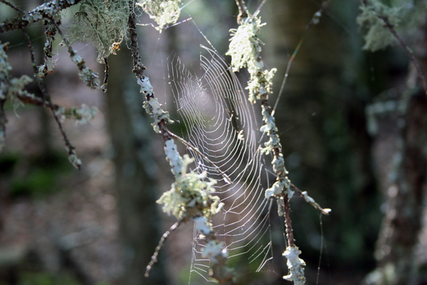 Spider Web - A walk in the woods