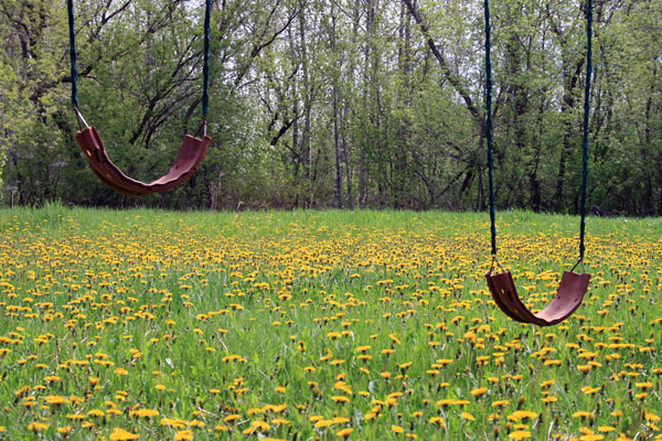 Swings in the Spring